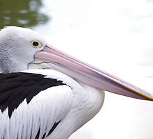 Pellie The Pelican by Jessica Hooper