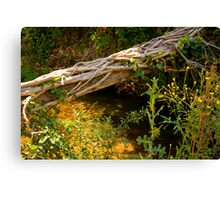 Fallen Tree over Stream Canvas Print
