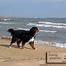 Dog Sympathy Card (beach) by back40fotos