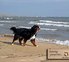 Dog Sympathy Card (beach) by back40fotos