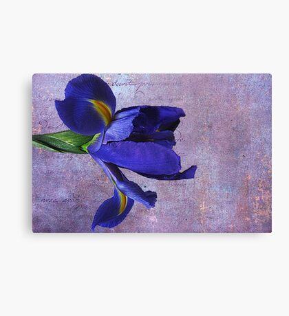 Lovely Lady Iris Canvas Print