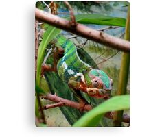 Blending in Beautifully Canvas Print