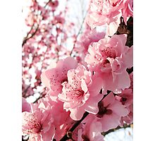 Early Blossom Photographic Print