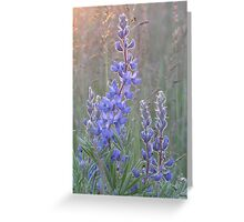 Soft Lupins Greeting Card