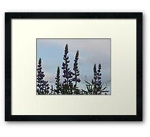Lupin Sky Framed Print