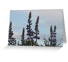 Lupin Sky Greeting Card