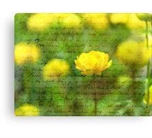 Beautiful Yellow Anemone flowers Canvas Print