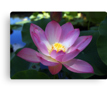 Waterlily and Light Canvas Print