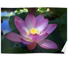 Waterlily and Light Poster