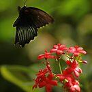 Fluttering In by KatsEyePhoto