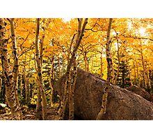 Colorado Aspens Photographic Print