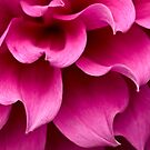 Waves of pink by Celeste Mookherjee