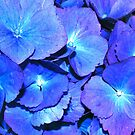 Hydrangea in HDR by Tori Snow