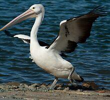 Do the Pelican Dance by Sonja Wells