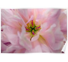 Floral Macro Poster