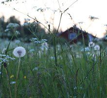 Swedish summernight by intensivelight
