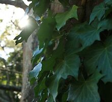 Ivy Sunstream by Sweet Shutter Bug Photography