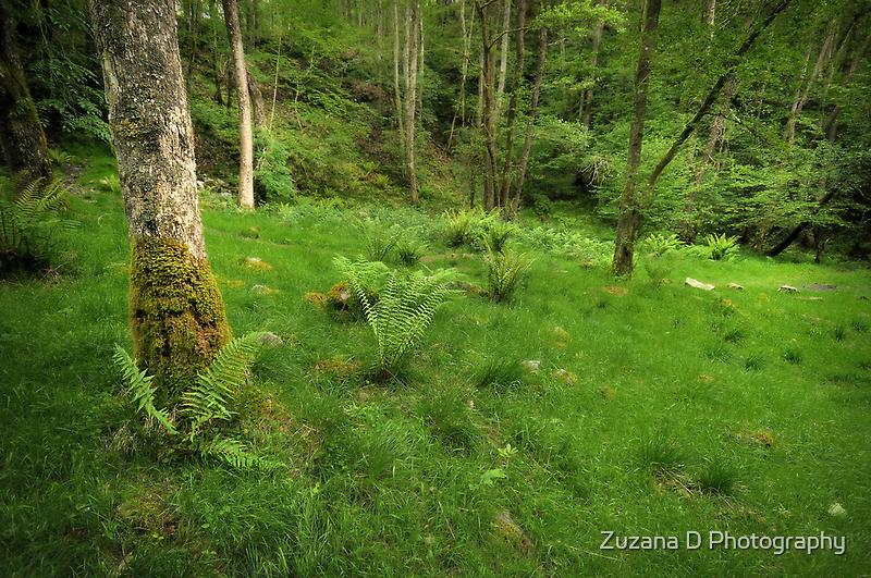 Jurassic fern by Zuzana D Photography