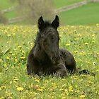 Peaceful foal at Littletree Stud by Fleur Hallam