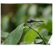 dragon fly on a twig Poster