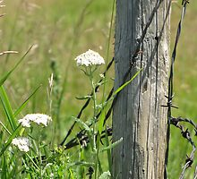Against the Fence by Kathi Arnell