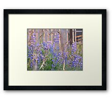 Lupin Blue Framed Print