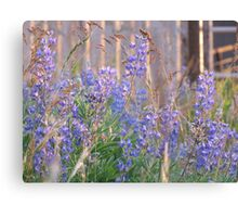 Lupin Blue Canvas Print