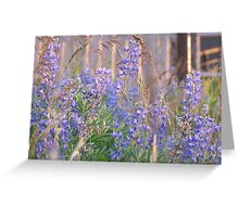 Lupin Blue Greeting Card