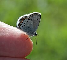 Butterfly sitting on a finger by intensivelight