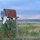 Got Mail by Rachel Sonnenschein