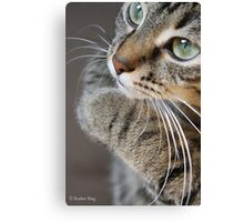 Pure Innocence Canvas Print
