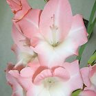 My gladiolus by Ana Belaj