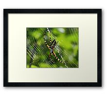 Black and yellow garden spider(orbweaver) Framed Print