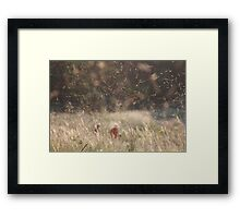 Dancing midges Framed Print