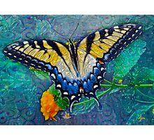 Swallowtail 2 Photographic Print