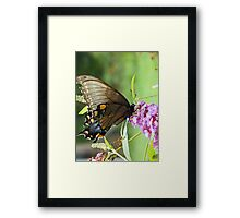 Eastern Tiger Swallowtail Female Framed Print