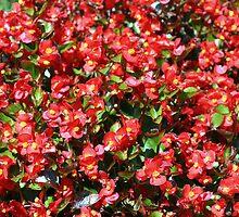 Begonias' Pillow by sstarlightss