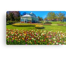 Tulips in Full Bloom at the Conservatory - Bendigo, Victoria Metal Print