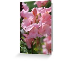 Snapdragons Antirrhinum Greeting Card