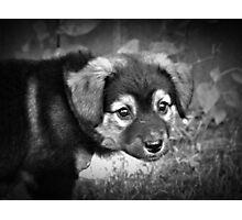 Sadie Photographic Print