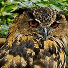 Eurasian Eagle Owl by Michaela1991