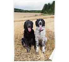 Gundogs - Quinn and Aran - Large Munsterlanders Poster