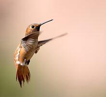 Hummingbird by Bryan Jolly