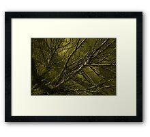 Naked willow  Framed Print