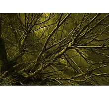 Naked willow  Photographic Print