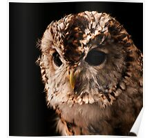 Tansy the Tawny Owl? Poster