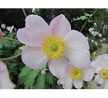 Another Anemone Photographic Print