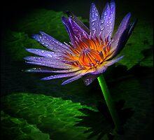 waterlily II by carol brandt