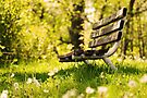 Empty Bench in Summer Park by April Koehler