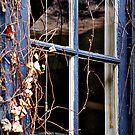 Winter Blues by Rinaldo Di Battista